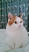 missing_cat2